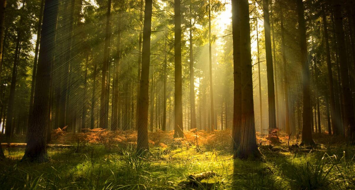 «Чистый лес – территория без огня»