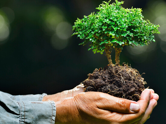 Акция «Сохраним лес»